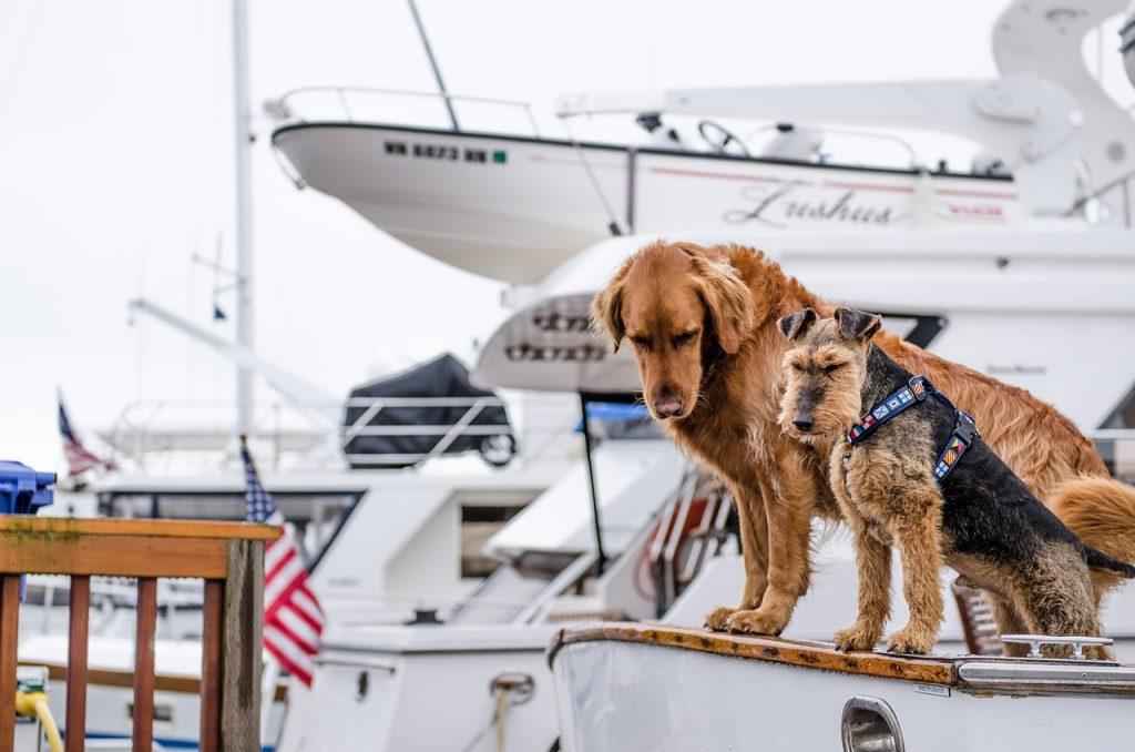 Hund auf Kreuzfahrt