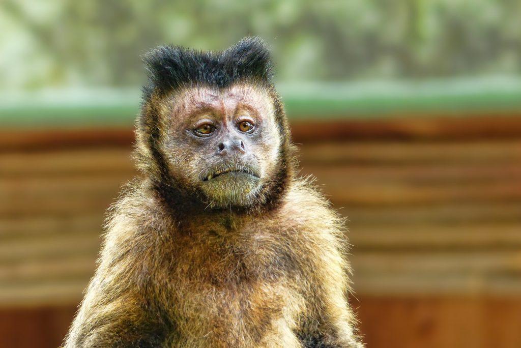 Zoo Hannover Hotel Angebot ab 55,00€ anstatt 103,50€