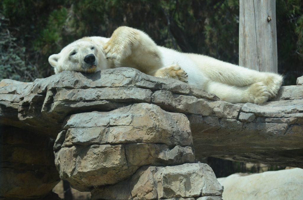 hannover zoo übernachtung