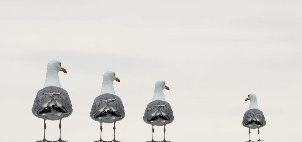Belgiens Vögel