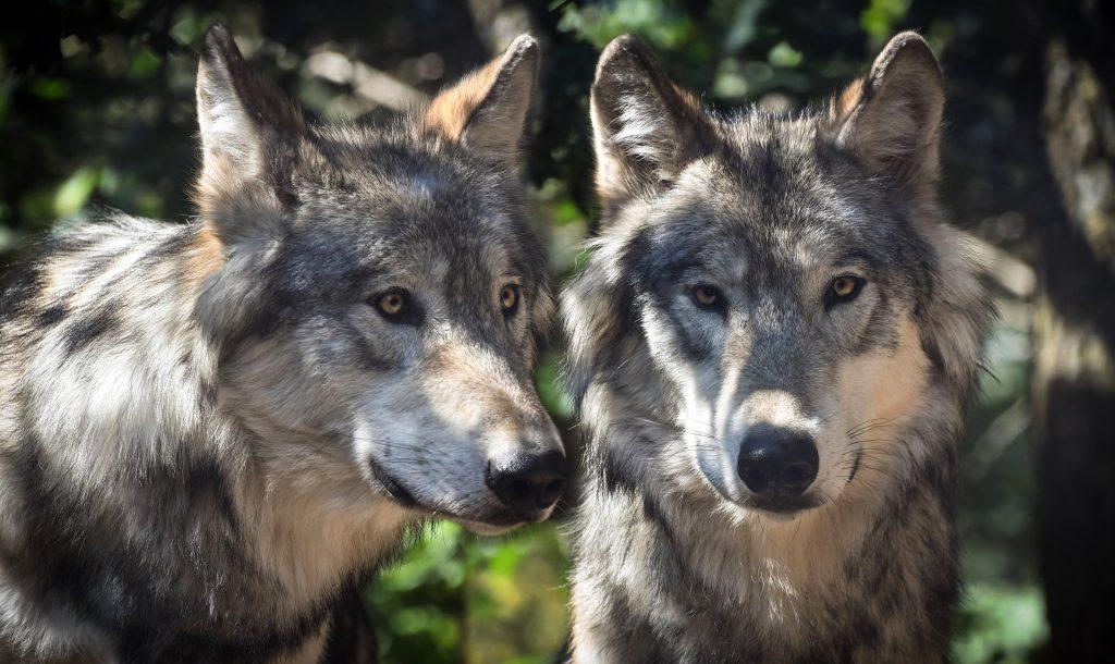 Wolfspark Werner Freund Merzig