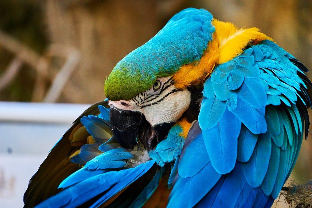Papageien Sprechen