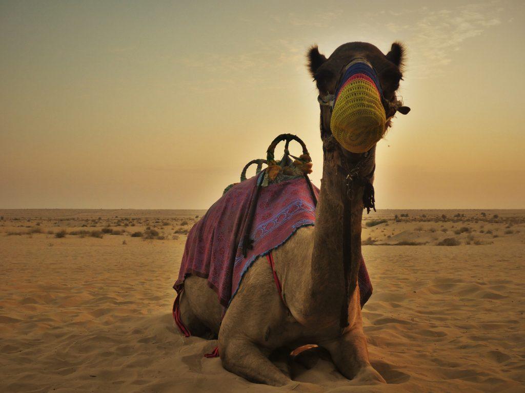 Eine Woche Dubai Vereinigte Arabische Emirate