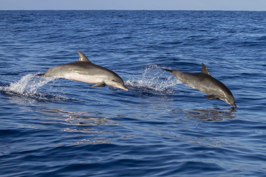 Madeira Reise Delfine