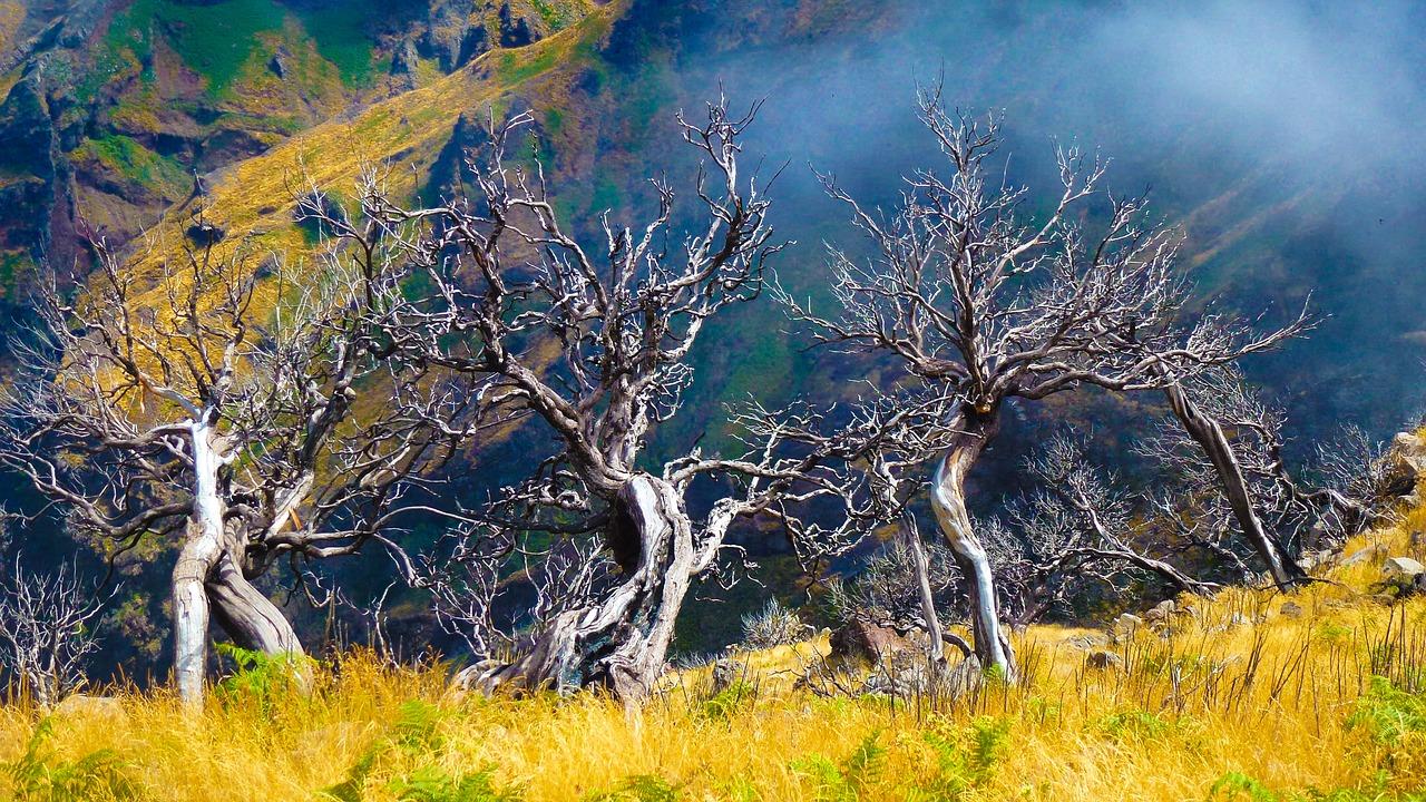 Madeira Reise - günstig nach Madeira reisen in den ewigen Frühling ab 139,00€ 1