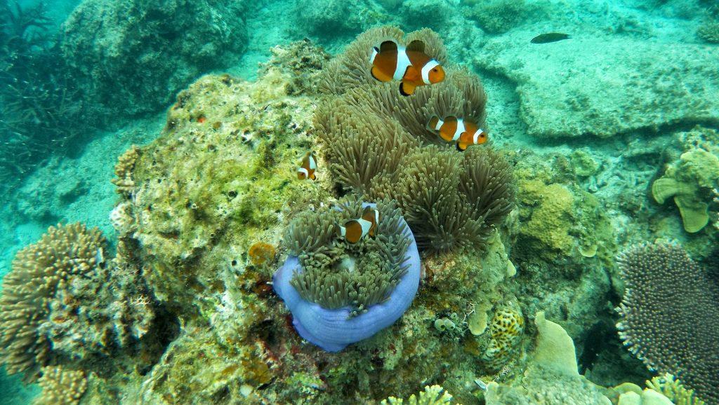 Malediven 5 Sterne Schnorcheln