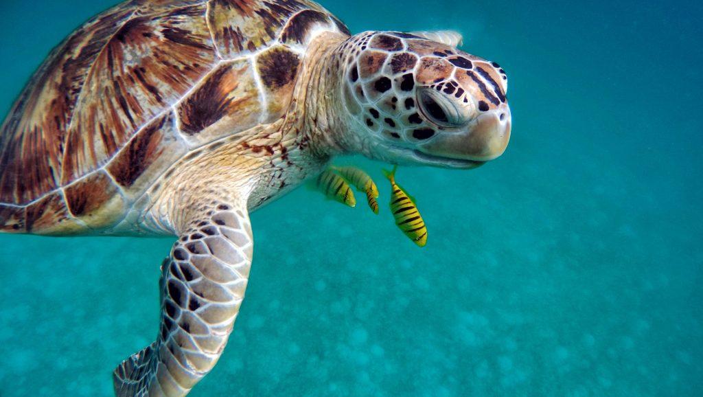 Malediven 5 Sterne ab 537,00€ Urlaub buchen - WoW Reisen