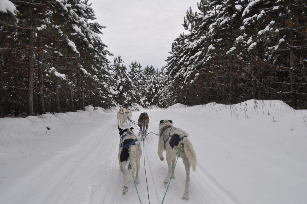 Reise zum Weihnachtsmann nach Lappland - günstig Reisen nach Finnland