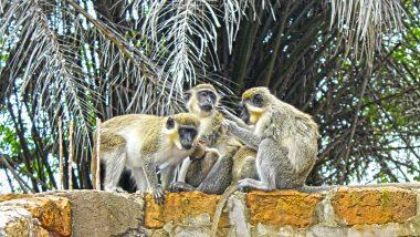 Affen in Gambia Single Urlaub nach Gambia eine Woche günstig ab 463,00€