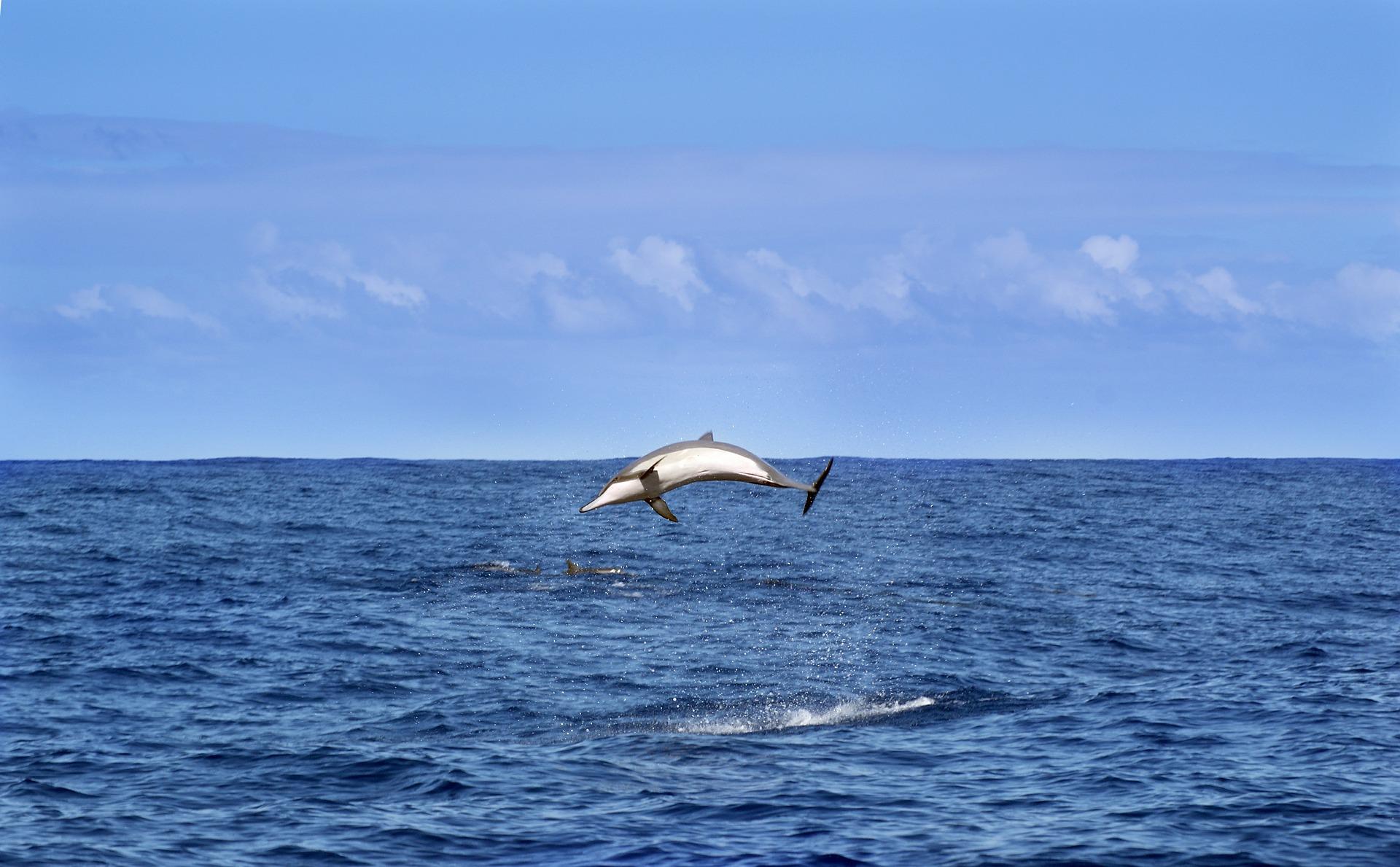 Es ist keine Seltenheit Delphine auf La Réunion zu sehen