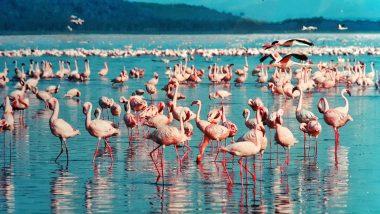 Pinke Flamingos sind nicht nur in Kuba vertreten bei Ihrer All Inklusive Rundreise in Kenia werden Sie diese auch finden