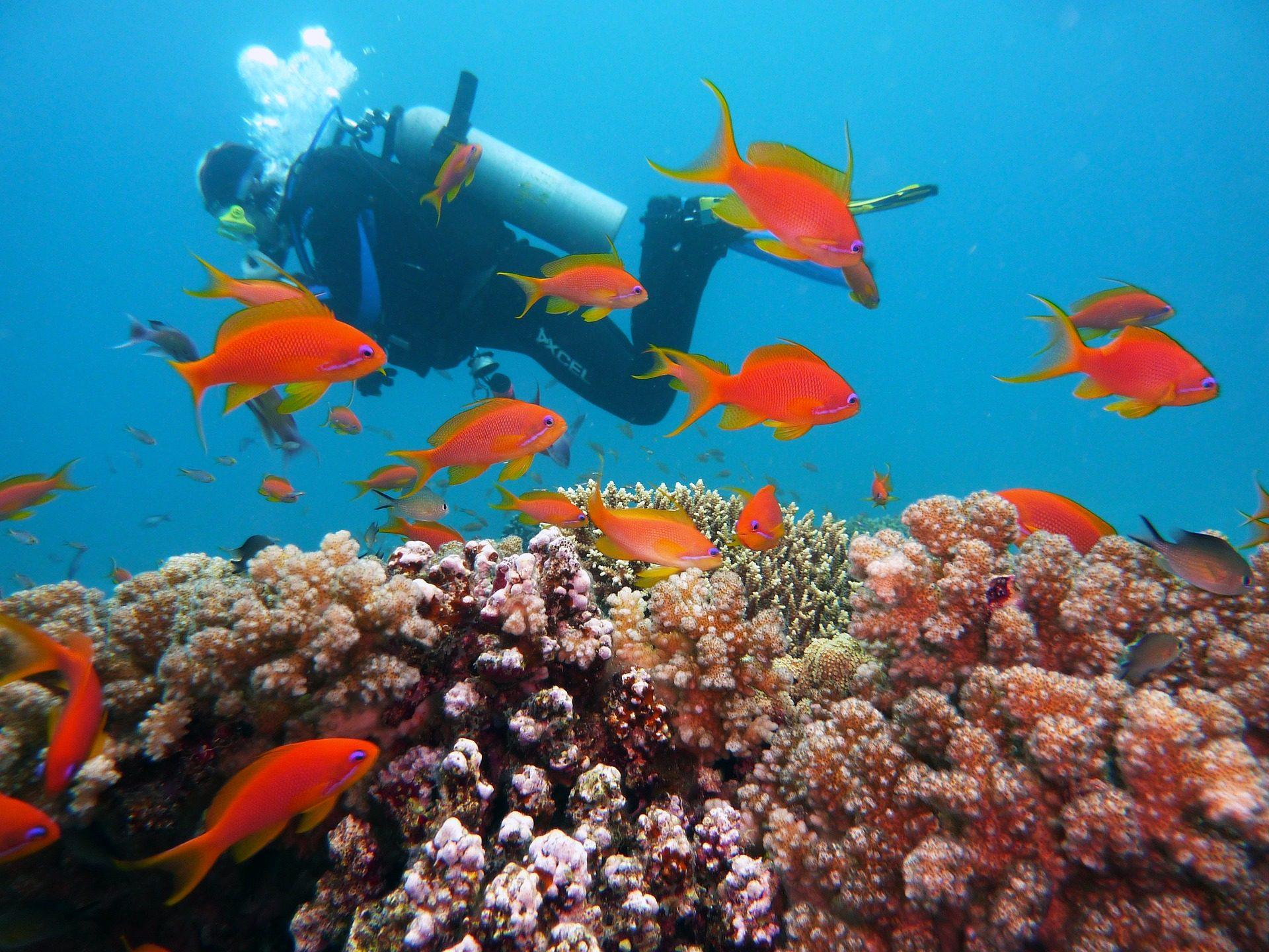 Hurghada Tauchen in Ägypten - Tauch ins Rote Meer