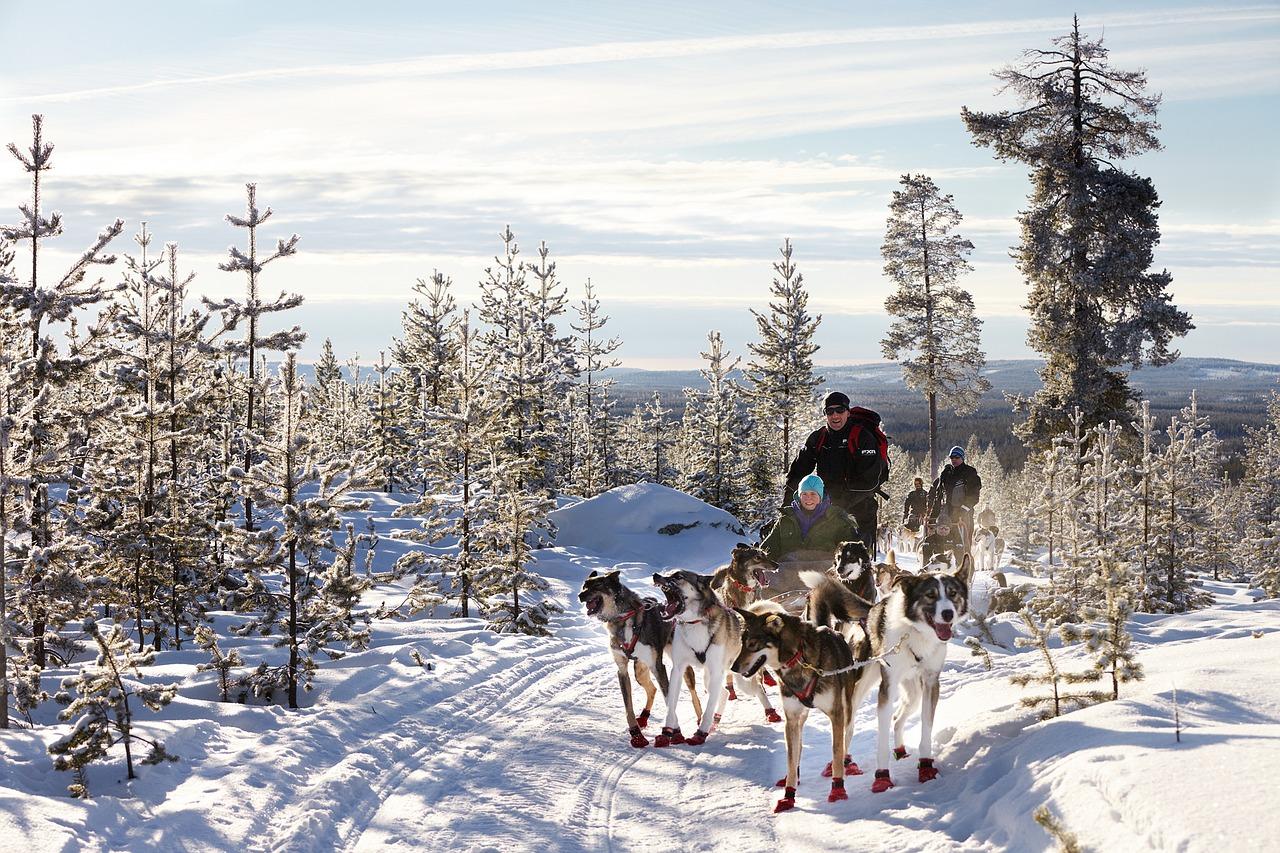 Husky Schlittenfahrten in Chamrousse -Skiurlaub
