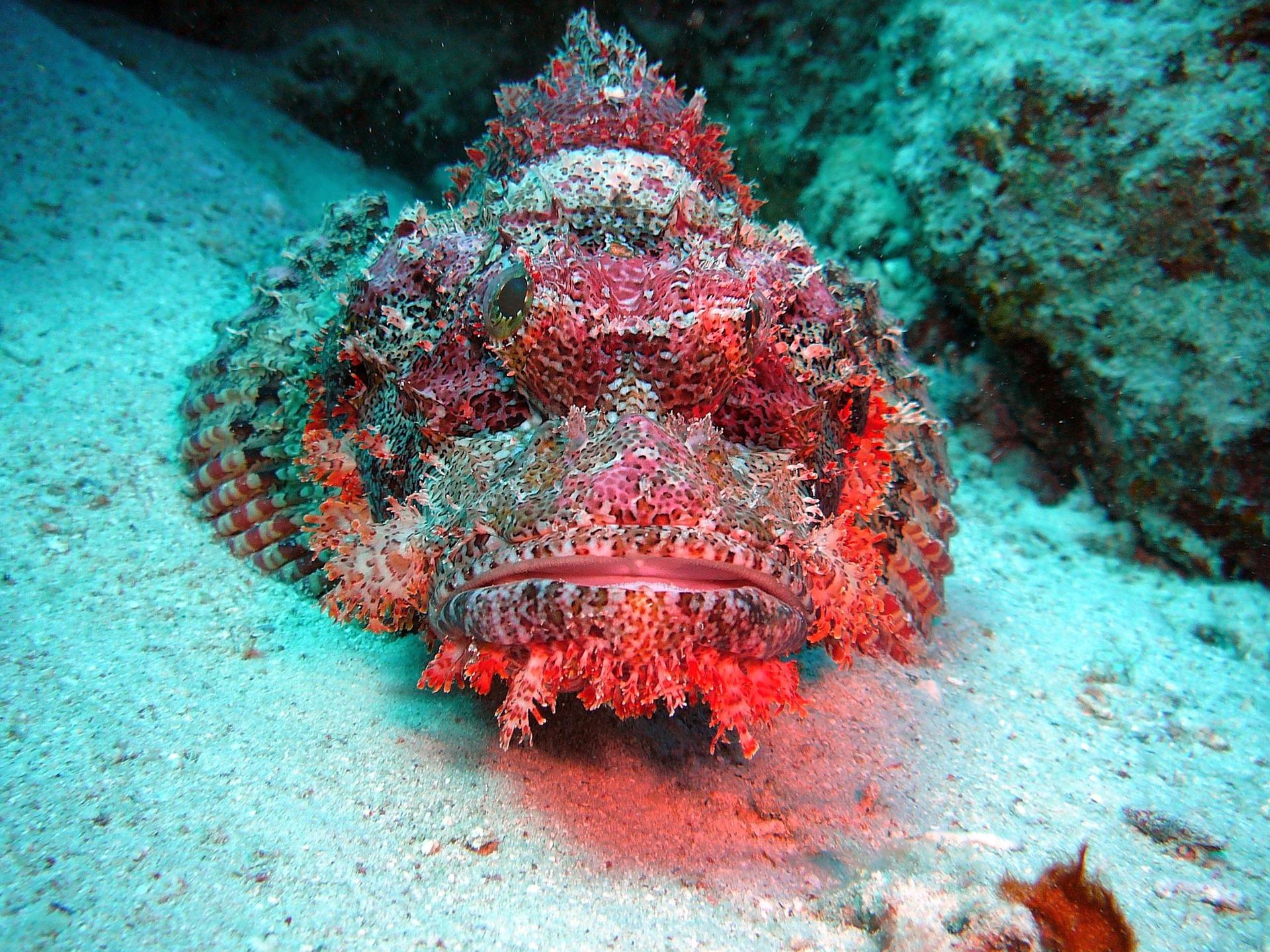Sahl Hasheesh Tauchen im Roten Meer - Roter Drachenkopf
