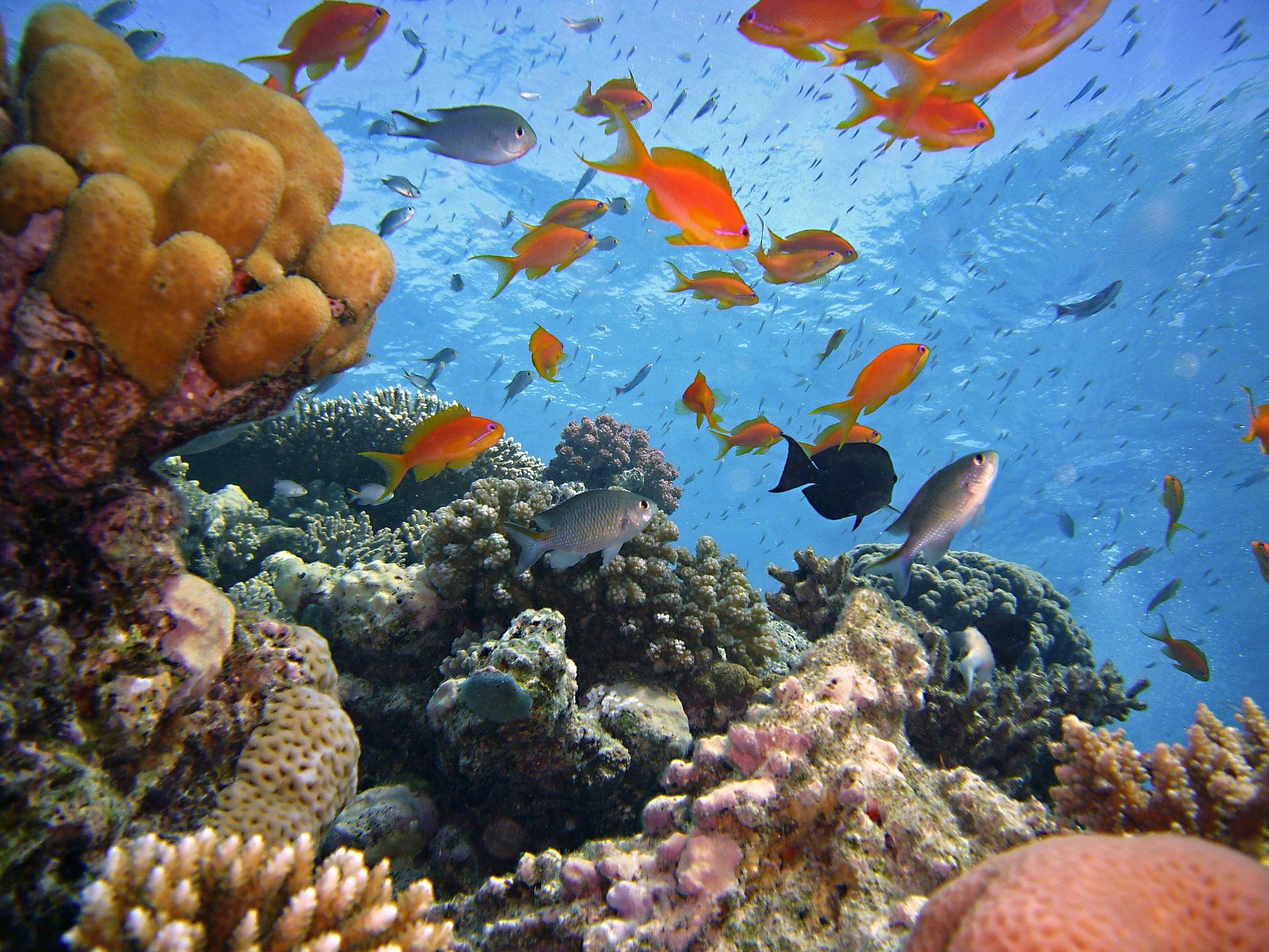 Tauchen Hurghada - direkt am roten Meer mit einer Glasklaren sicht auch unter Wasser