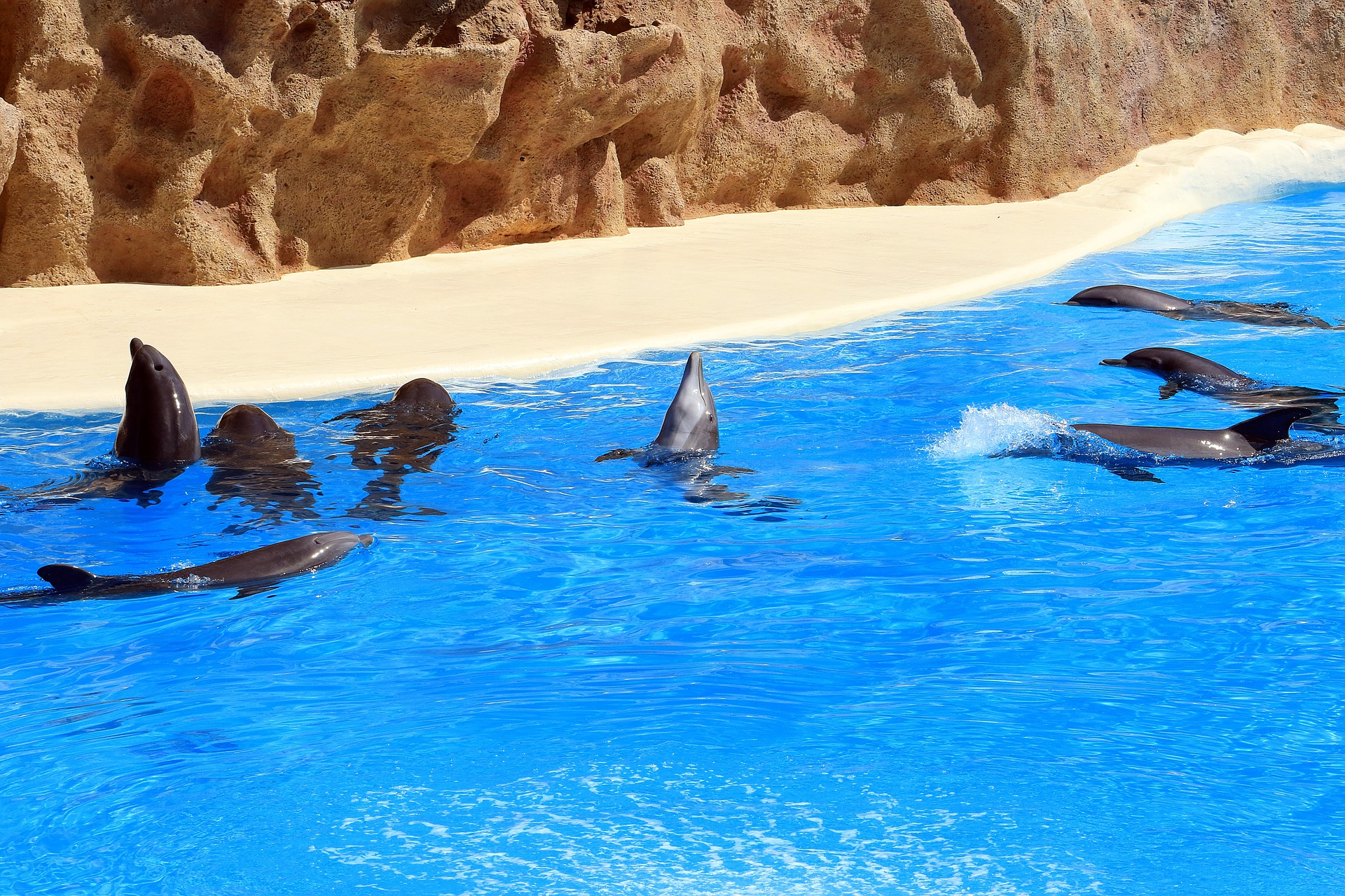 Teneriffa Urlaubsorte ab 88,00€ im Hotel Globales Acuario - Teneriffadeals 1