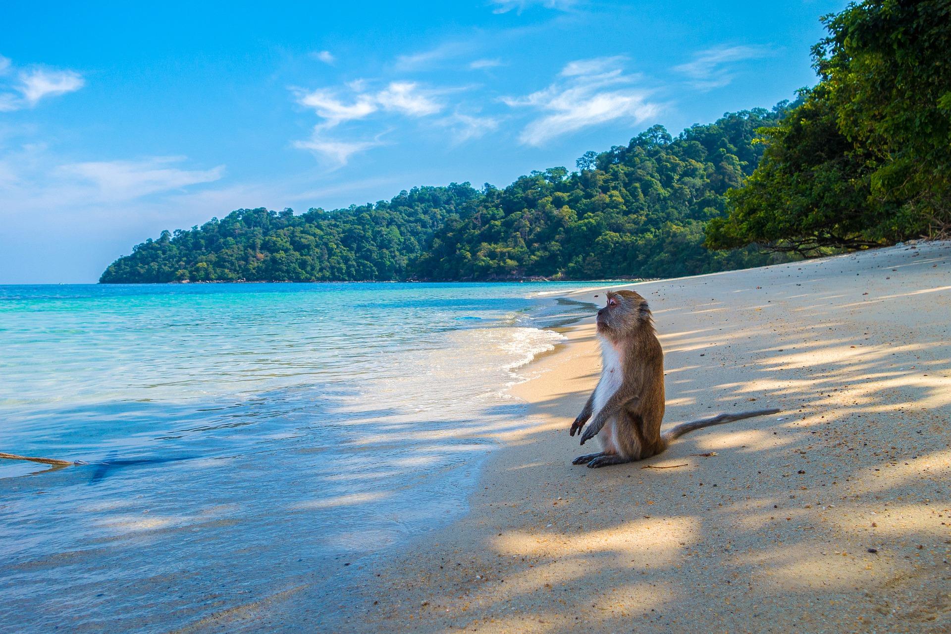 Auf Koh Phangan & Koh Samui warten die Affen schon auf dich