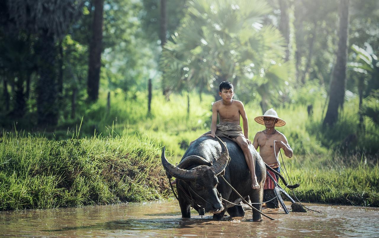 Auf jeglichen Tieren dieser Welt reiten die Menschen bei uns ist der Pferd das schnellste Tier