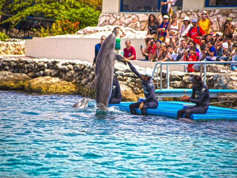 Es ist keine seltenheit das beim Tauchurlaub curcao die Delphine auf Sie aufmerksam werden