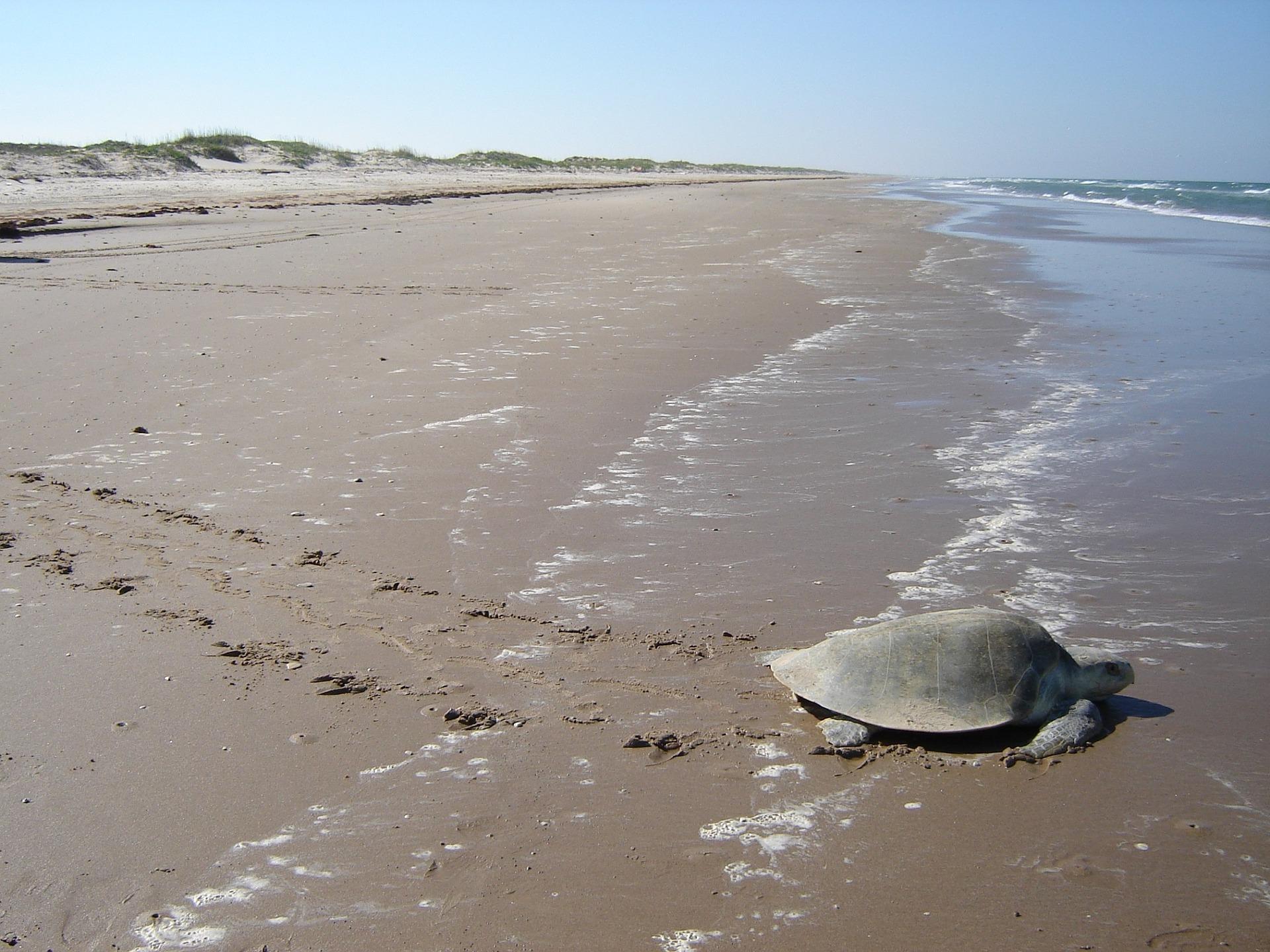 Es ist keine seltenheit hier am Strandabschnitt mal den ein odere anderen Meeresbewohner zu sehen