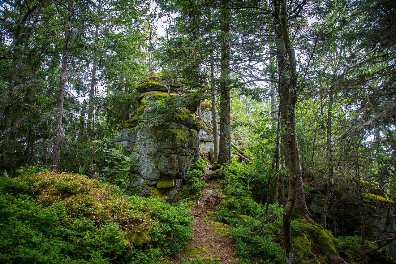 Im tiefen Wald in Bayern der als Nationalpark Deutschlands weltweit bekannt ist