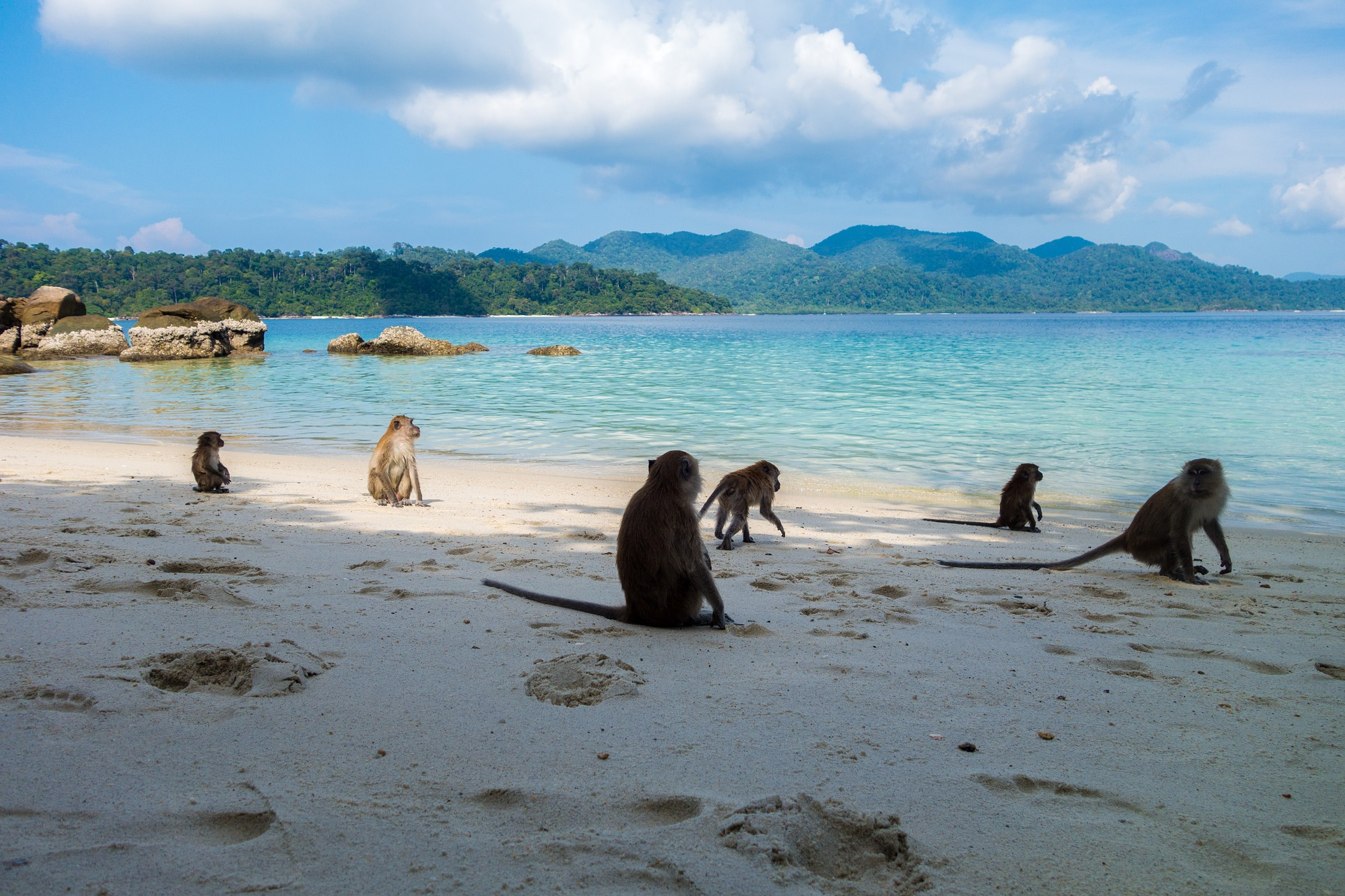 Koh Phangan Bungalow - Freundet euch mit den Affen an, kann ich nur empfehlen