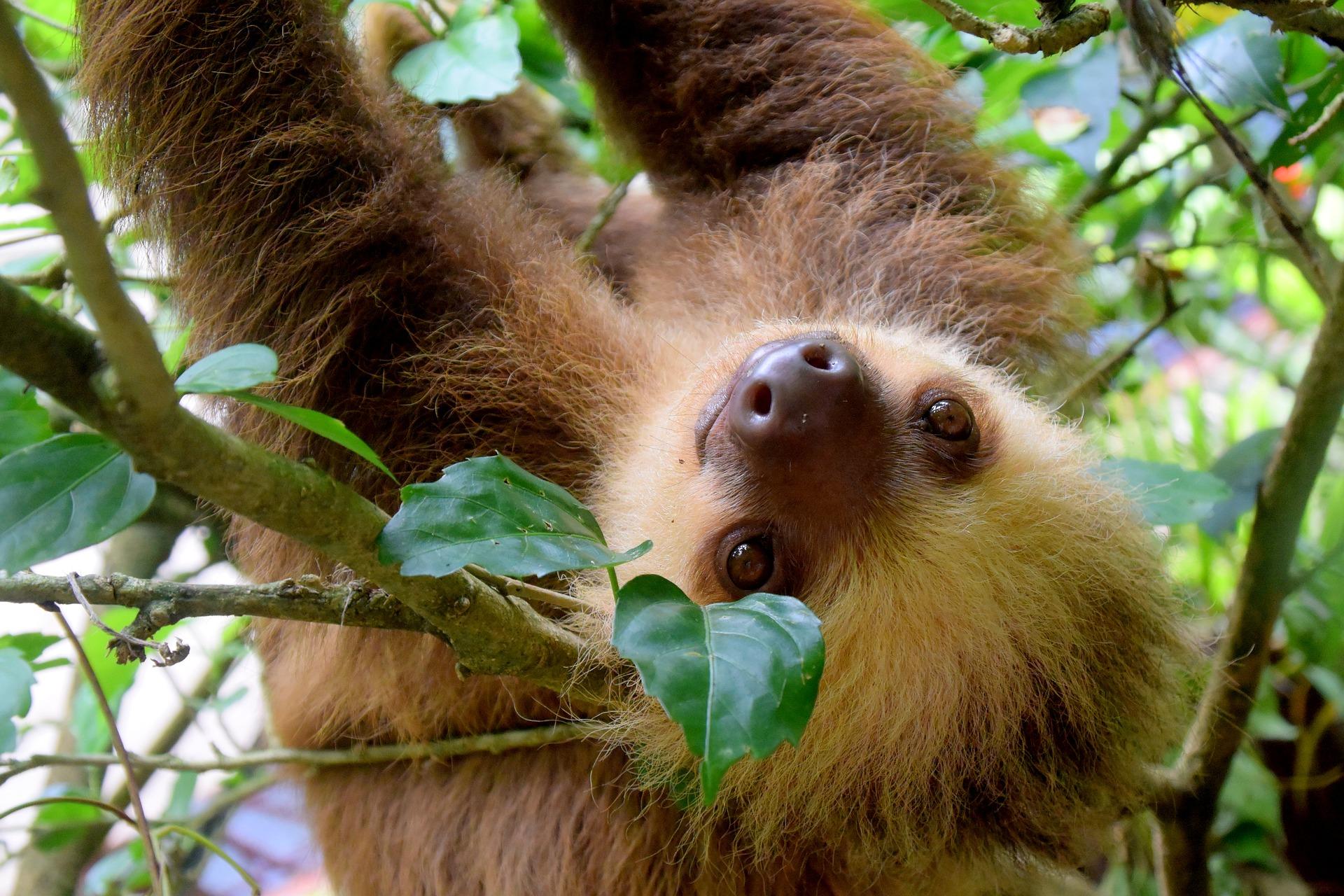 Kokosinsel Costa Ricas dein Reisedeal um der Insel näher zu kommen