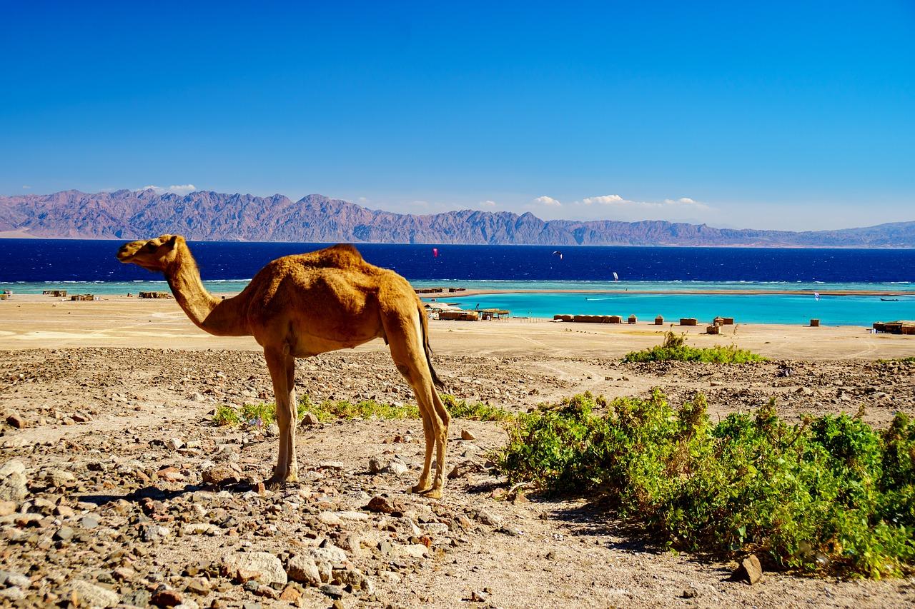 Last Minute Ägypten oder doch lieber Frühbucher Rabatt sichern & deinen Strandurlaub planen