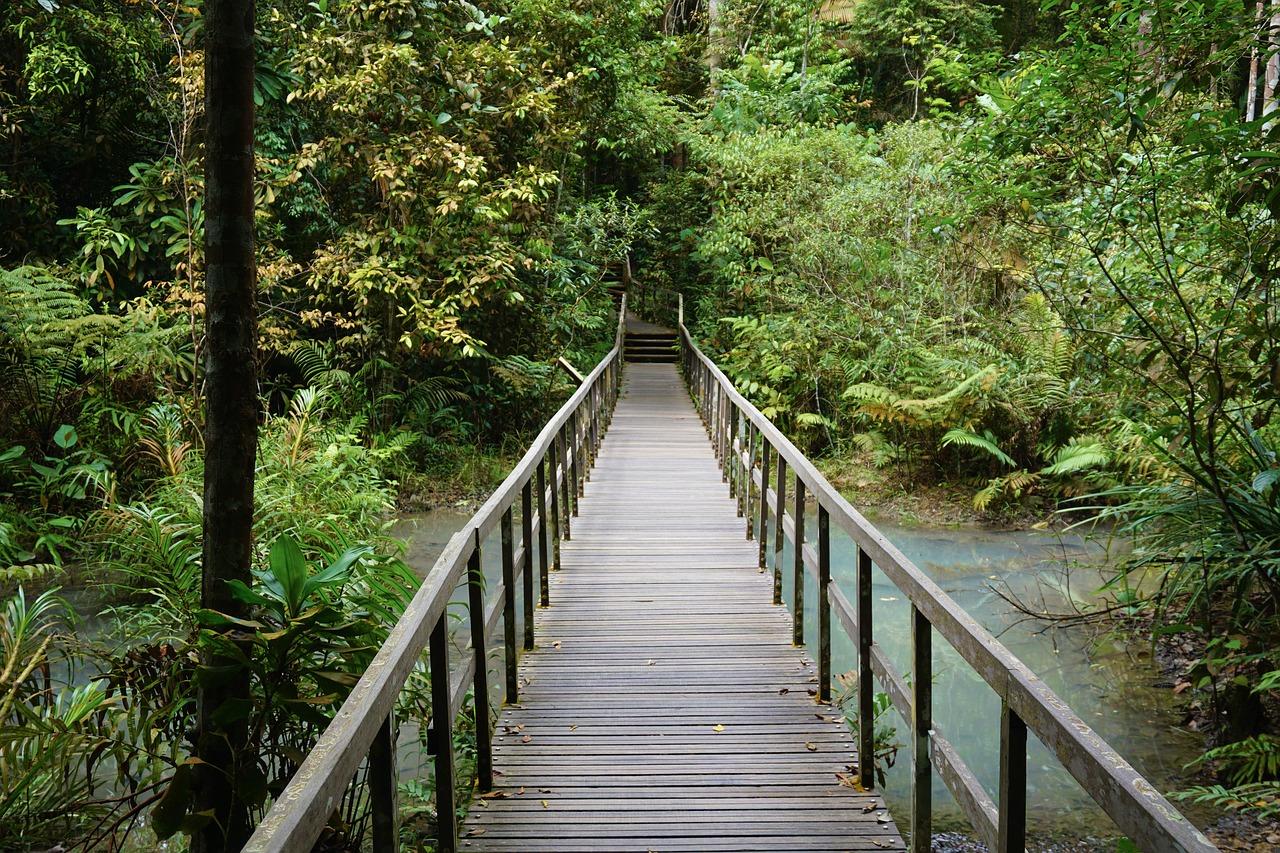 Meine Eindrücke - Singapur Reisetipps sind sehr wichitg, ich empfehle euch aufjedenfall in die Natur zu gehen