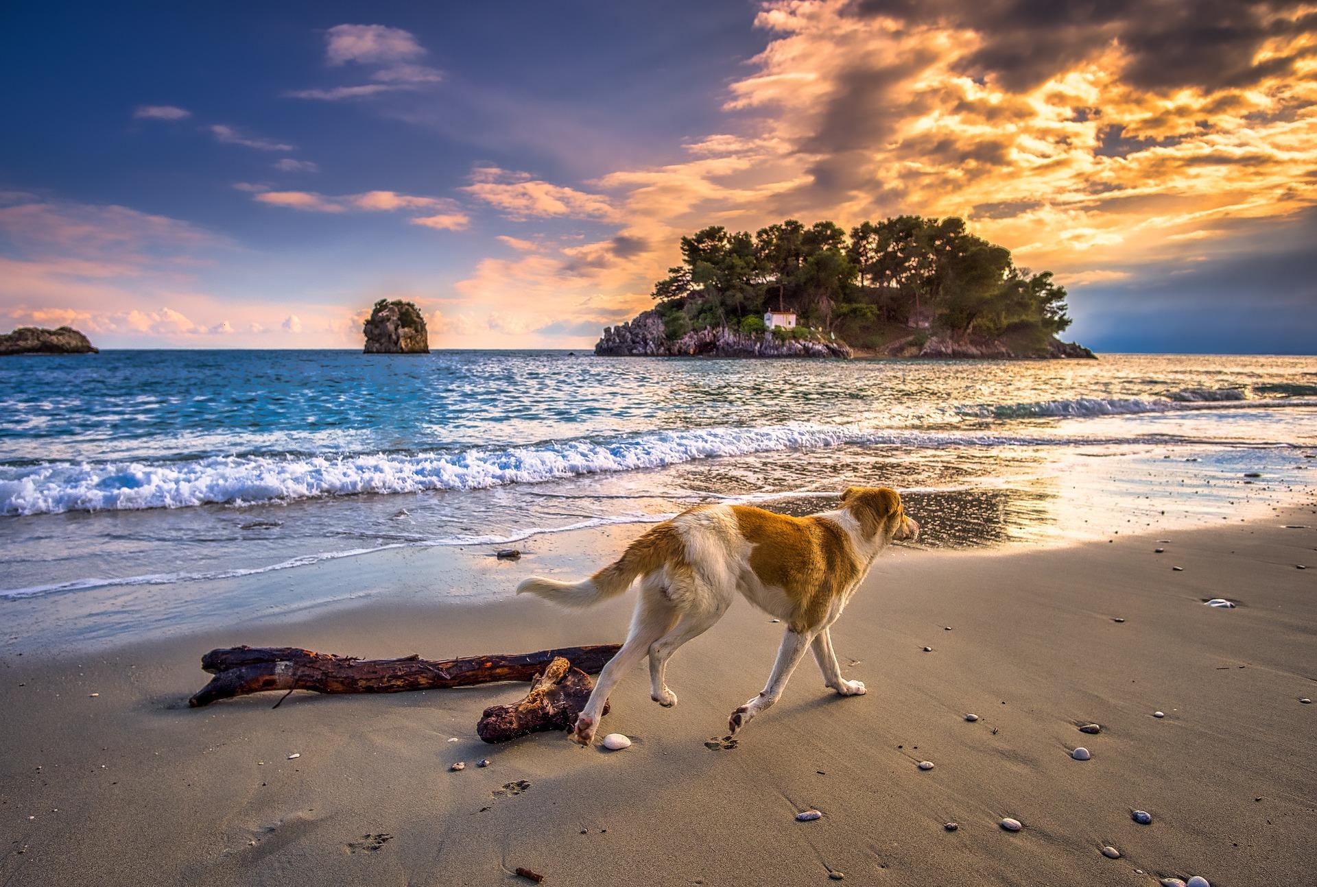 Messolonghi eine Woche Urlaub auch mit den Haustieren möglich