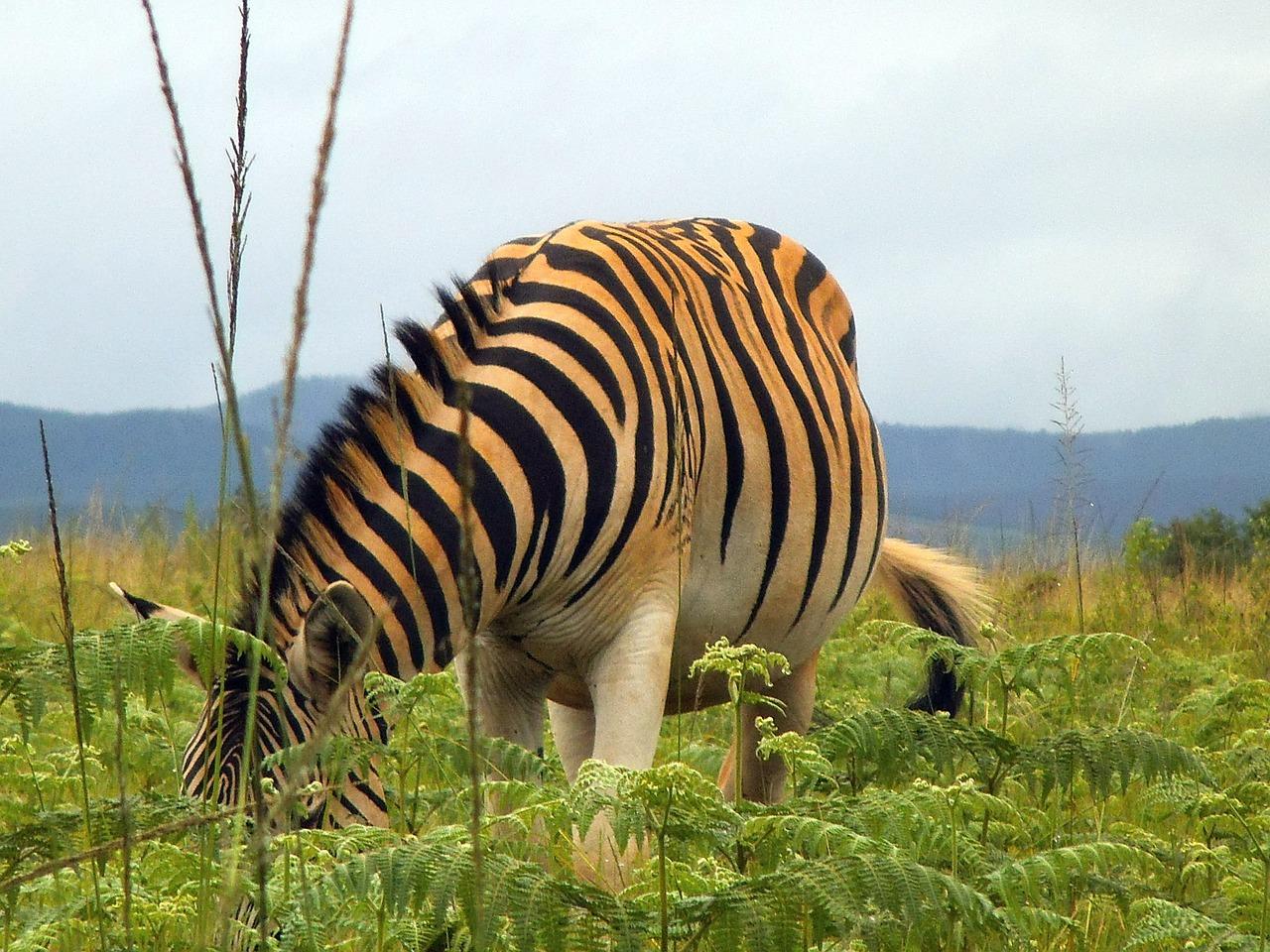 Mitten in der herrlichsten Natur in Afrika im Höherem Gebirge auf Safari gehen