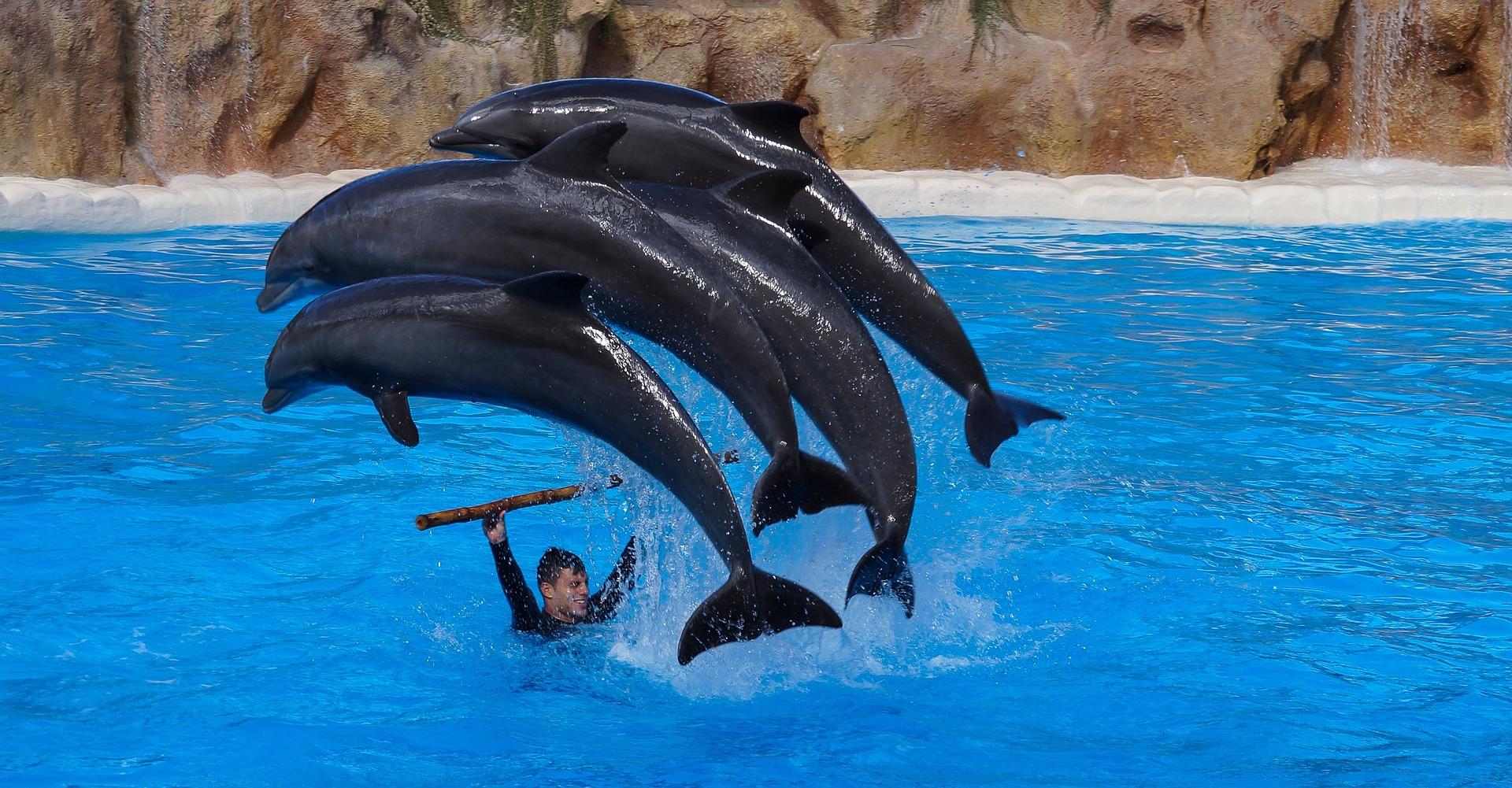Wal und Delfin Beobachtungen starten schon günstig ab 40,00€