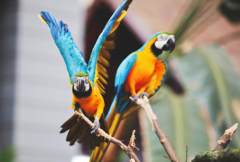 Ja, auch die Vögel sind echt