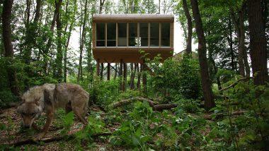 Außergewöhnliche Hotels in Deutschland Top 5 Deswegen Urlaub mal anders Tree Inn
