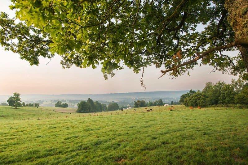 Ideal für ruhe Suchenende bietet sich dieser Center Park Belgien Ideal an für einen unbeschwerten Urlaub