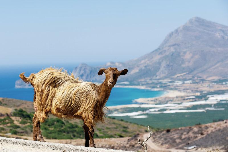 Kreta Ferien ab 196,00€ 1 Woche genießen Griechenland