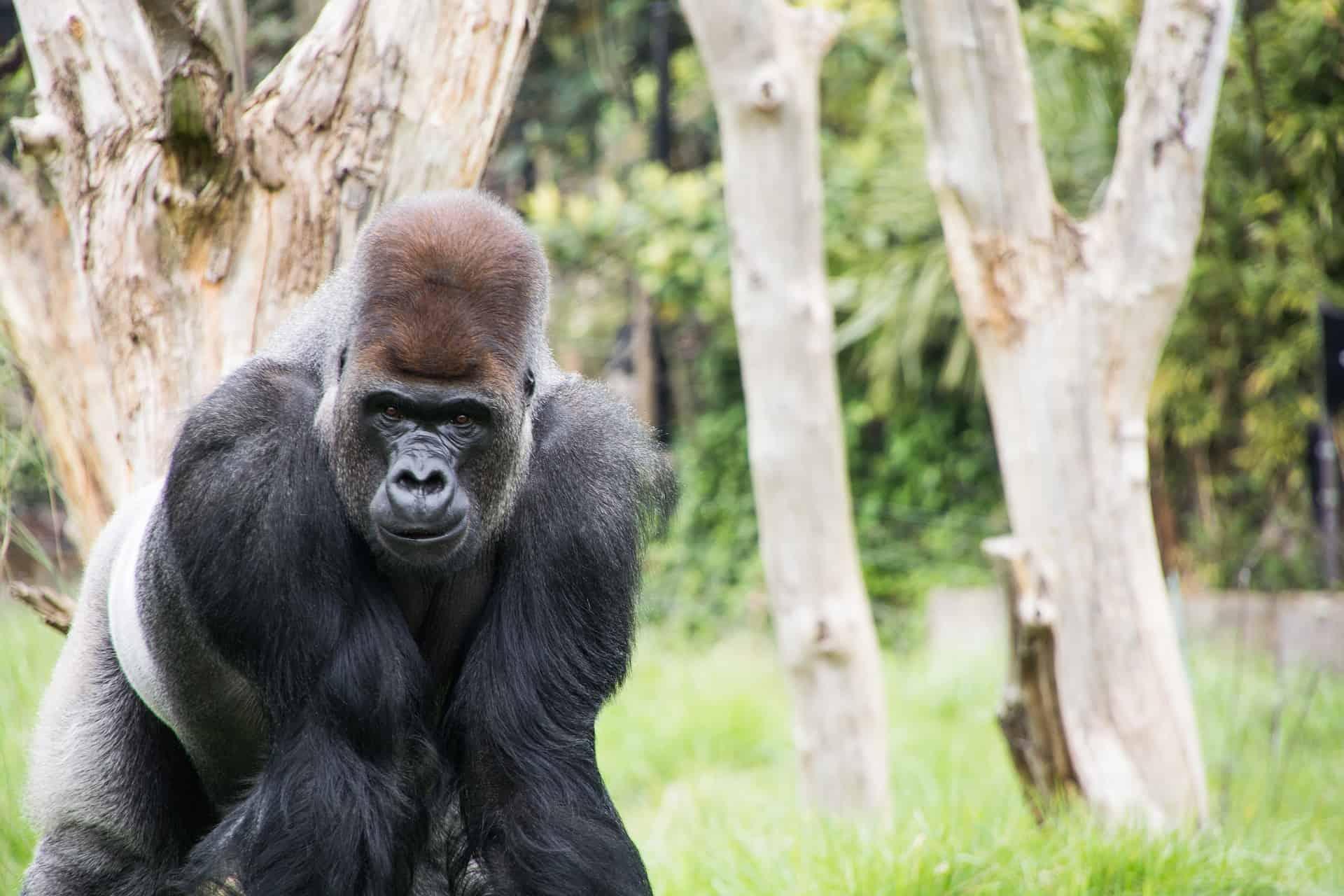 Londoner Zoo der älteste der Welt - jetzt 10% Rabatt erhalten