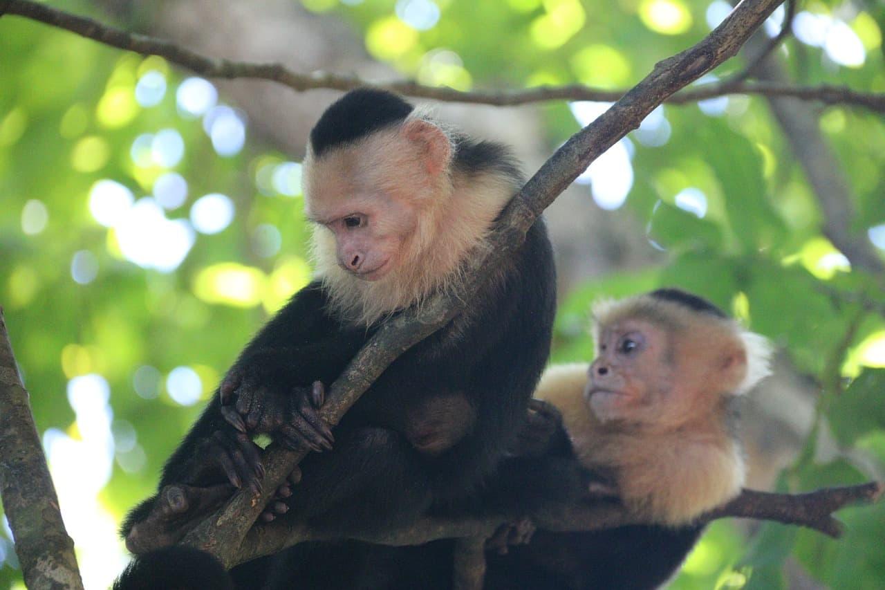 Monkey Island in Panama