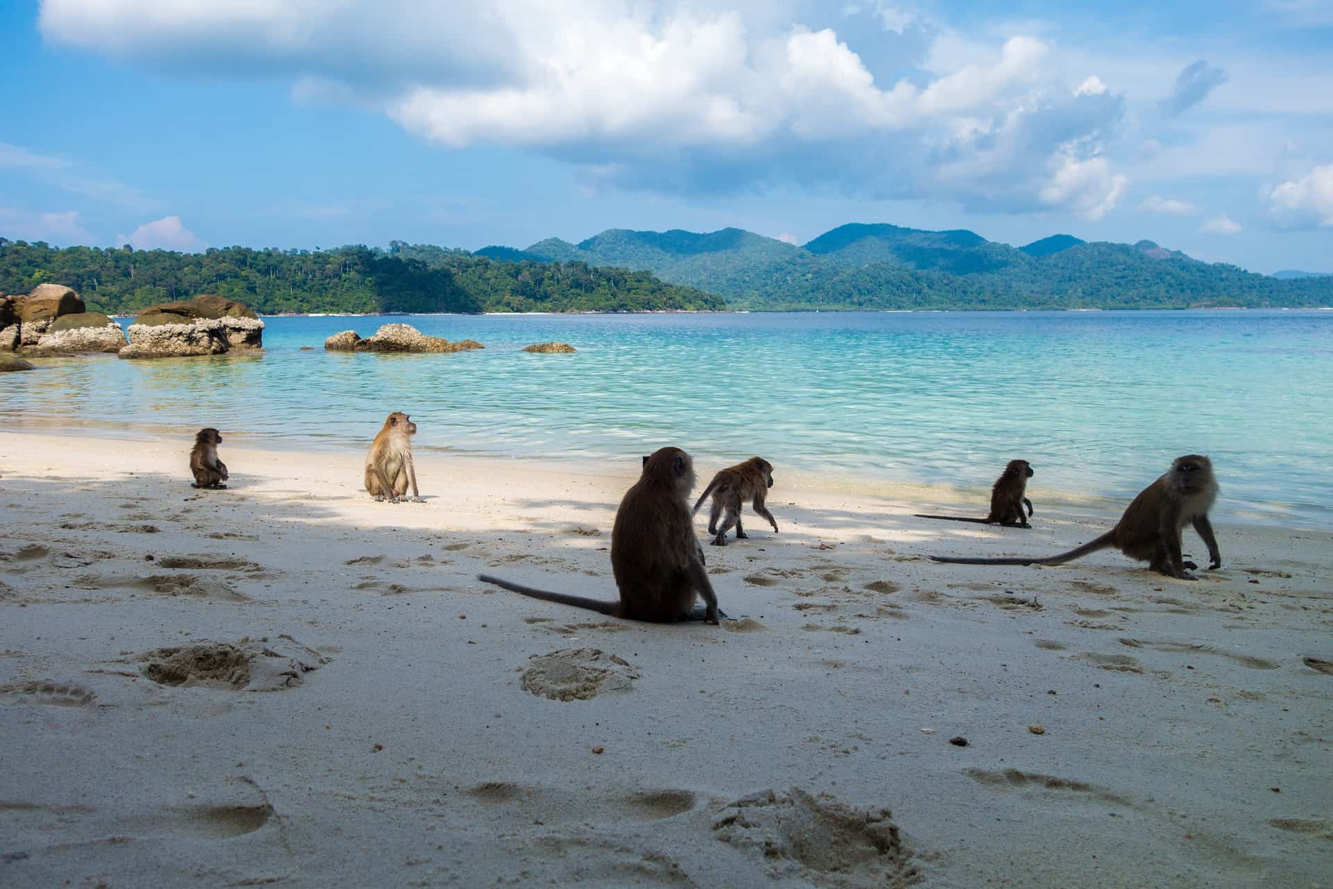 Monkey Island in Thailand