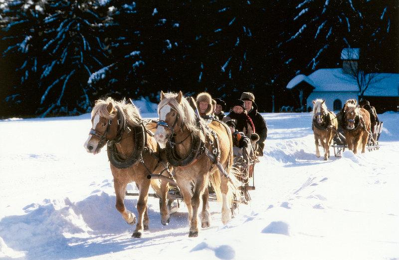 Pferdeschlitten fahren im Bayerischen Wald