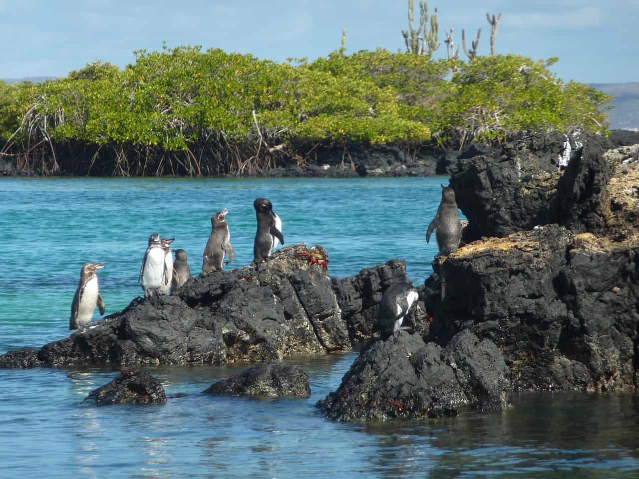Während des Galapagos Inselhopping werdet Ihr schon auf dem Weg nach Islet Tntoreras zahlreiche Pinguine und Haie entdecken