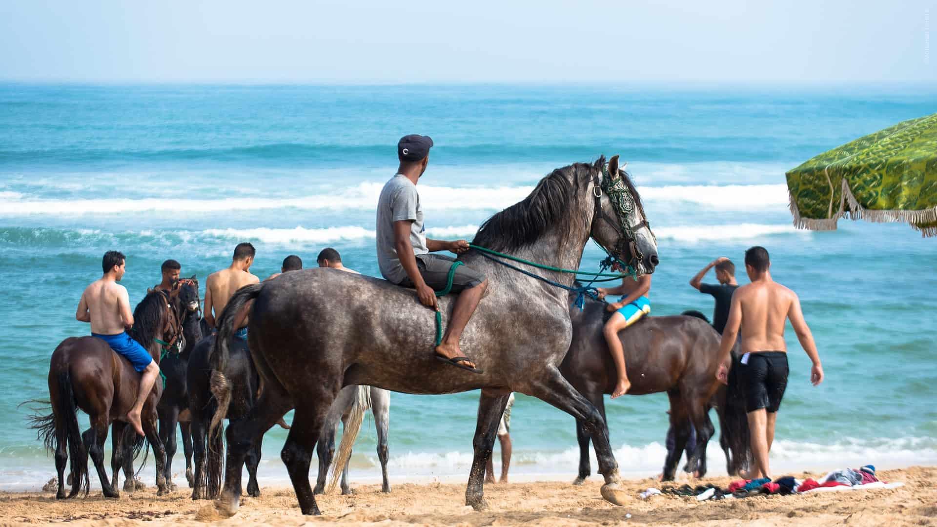 2 Wochen Agadir der Strand ist ideal um mit dem Pferd zu reiten bei der 12 Kilomete rlänge