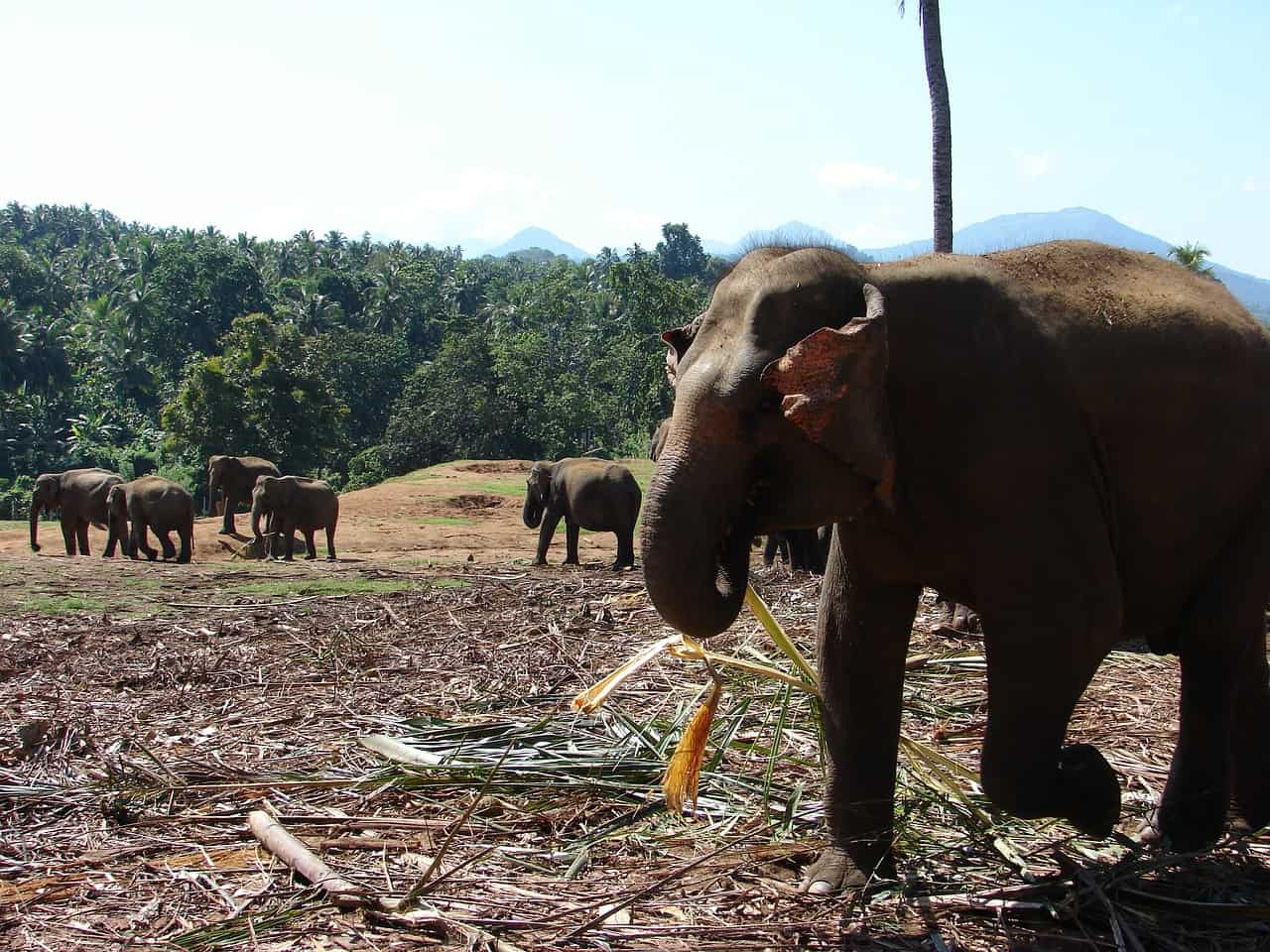 An der Stadt Khao Lak liegt der Nationalpark Khao Sok mit dem Elefenaten Camp