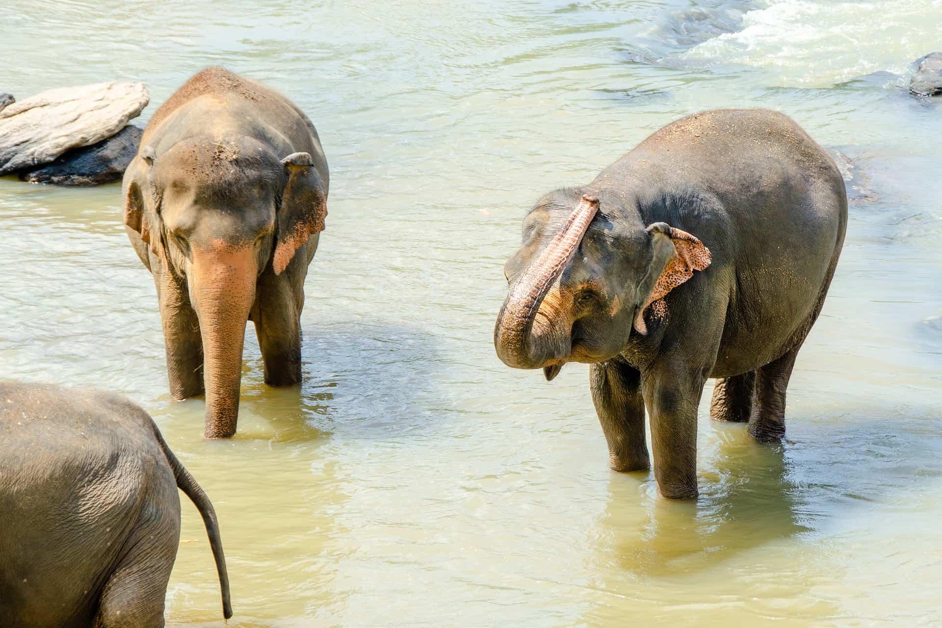 Elefanten in Sri Lanka - es gibt teilweise Tierarten die es nur hier gibt