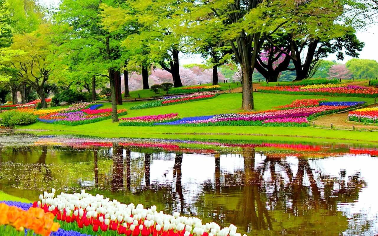 Keukenhof - Tulpenblüte Holland nur 59,00€ Tagesreise ab Rotterdam