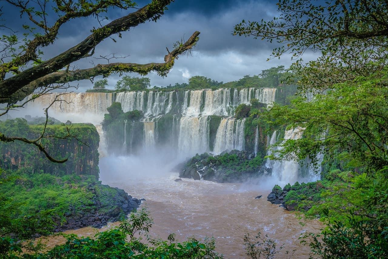 Touren in den Regenwald empfehle ich euch unbedingt bei einem Brasilien Urlaub