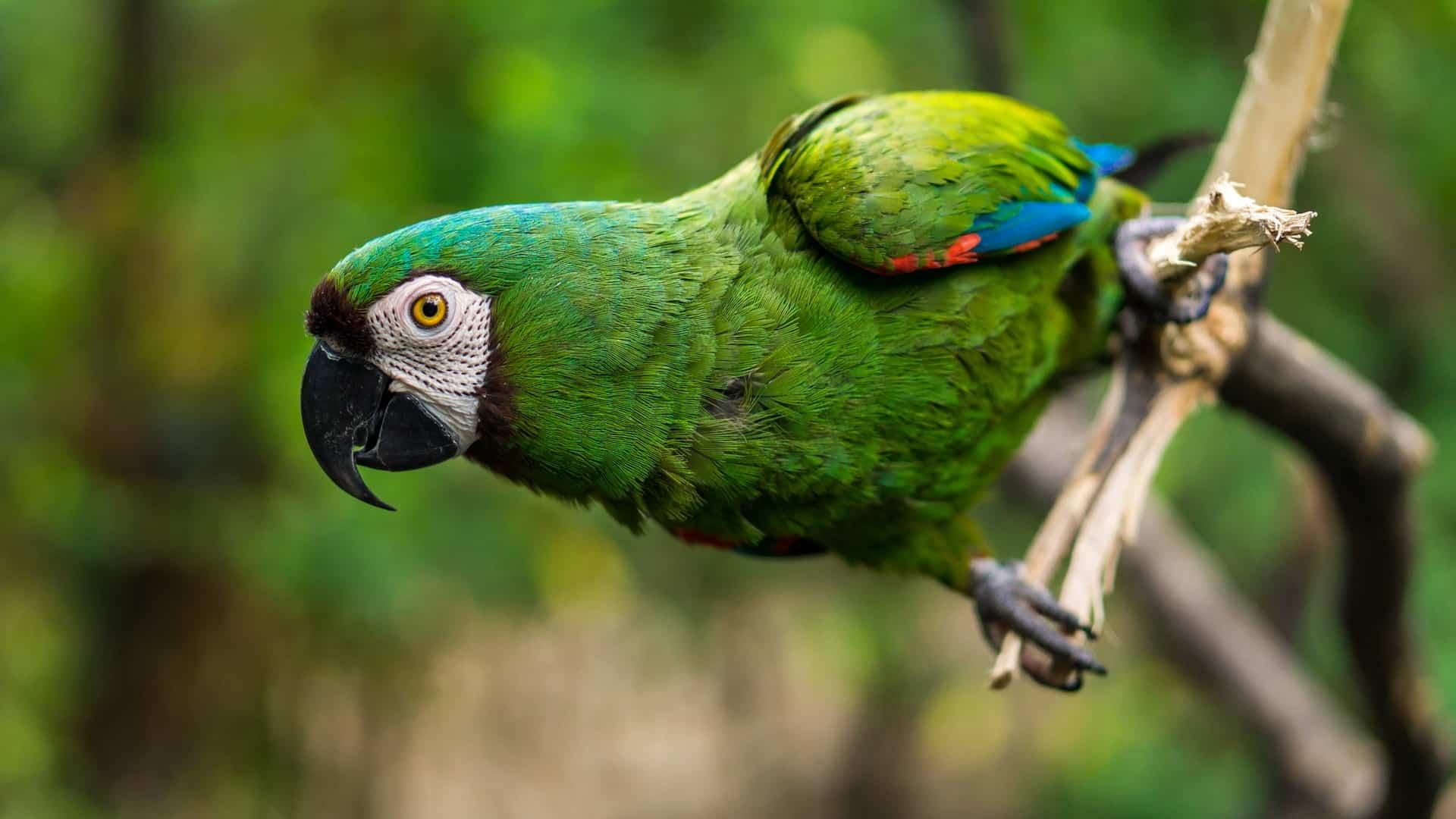 Die Tierwelt ist so Bunt in Südamerika für Naturliebhaber empfehle ich mindestens einen ganzen Monat zu bleiben