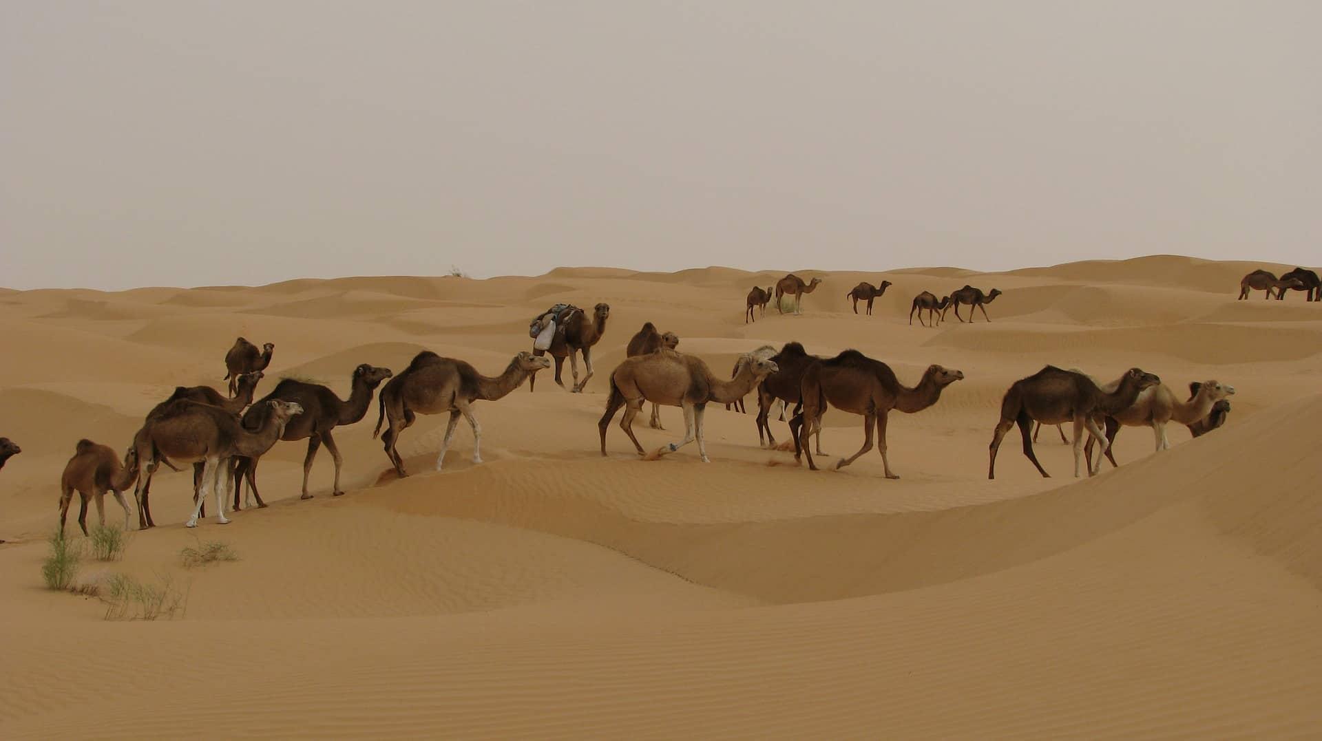 Djerba 4 Sterne Hotel Deal nur 210,00€   Tunesien 1