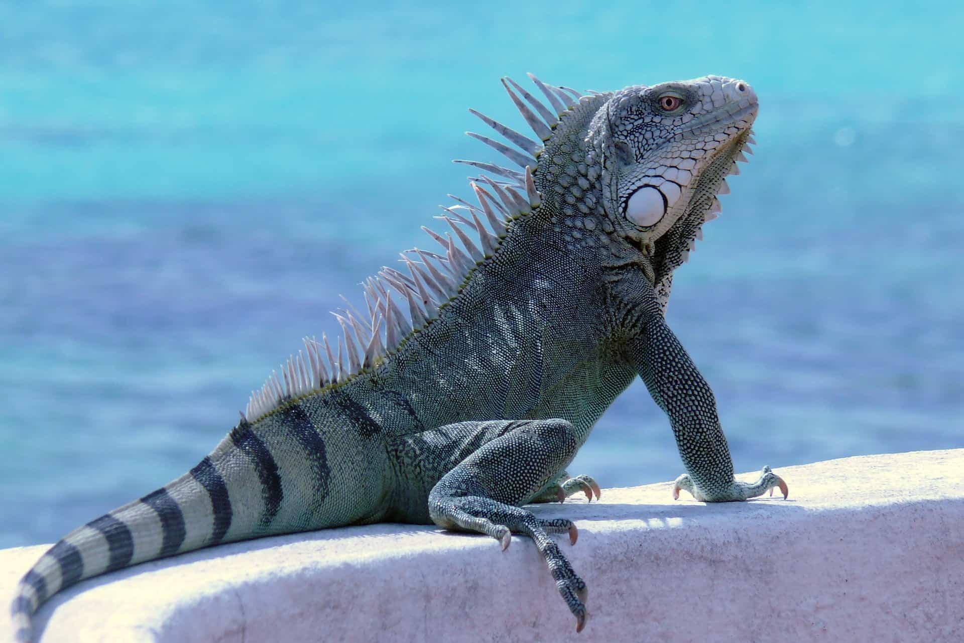 Bonaire Urlaub nur 1189,00€ - Karibik Reisen 1