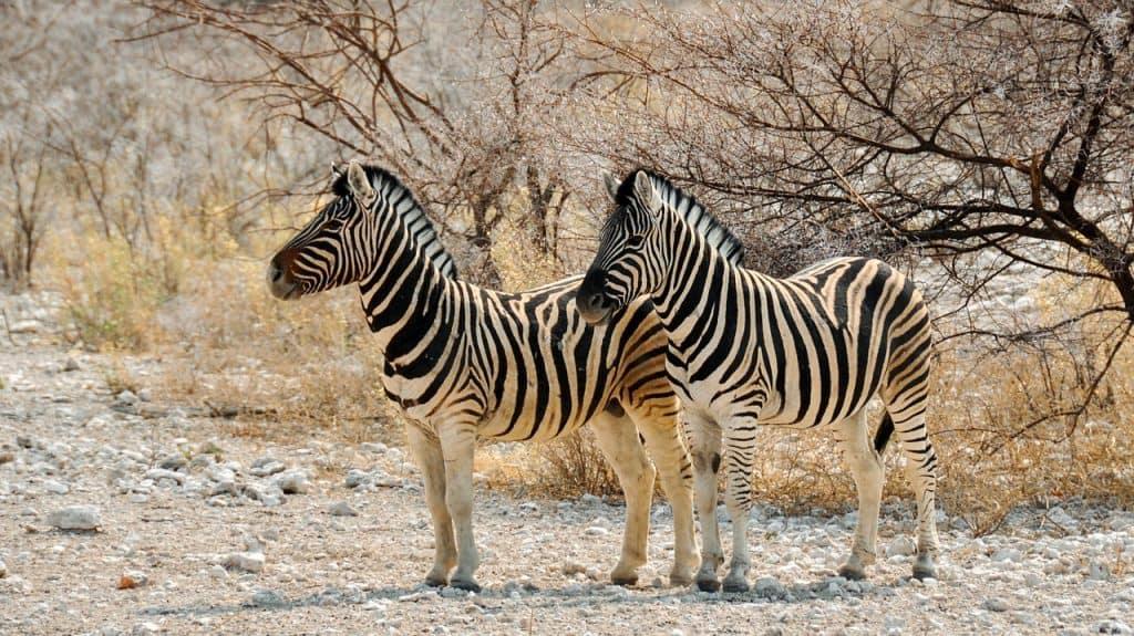 An der Küste Namibias findet Ihr zahlreiche Nationalparks